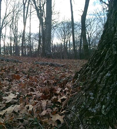 Original photo of trees